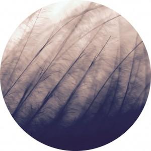 xander-ashwell-25528 Kopie